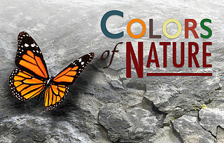 Educational Program: Colors of Nature